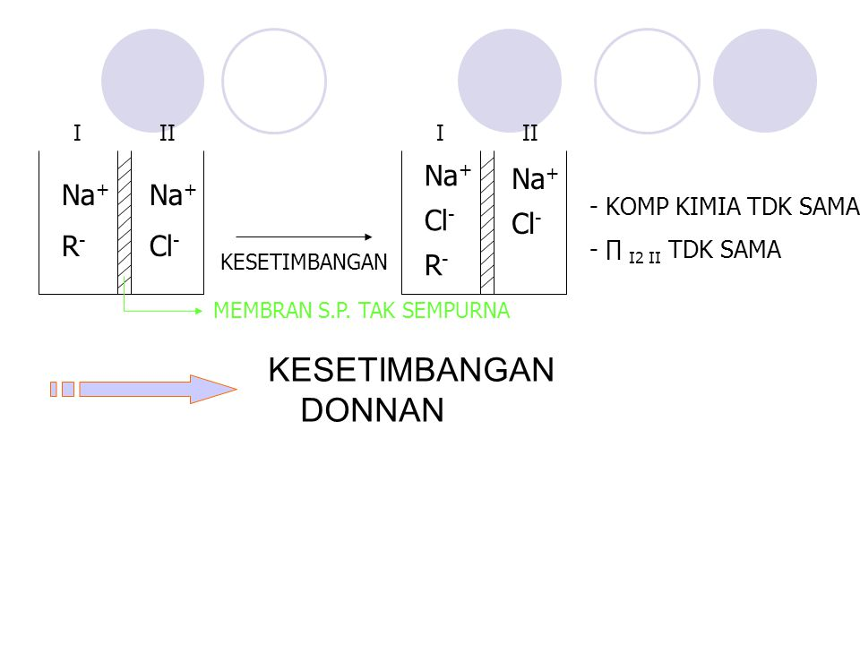 KESETIMBANGAN DONNAN -KOMP KIMIA TDK SAMA -∏ I2 II TDK SAMA Na + Cl - R - Na + Cl - I II KESETIMBANGAN Na + R - Na + Cl - I II MEMBRAN S.P. TAK SEMPUR