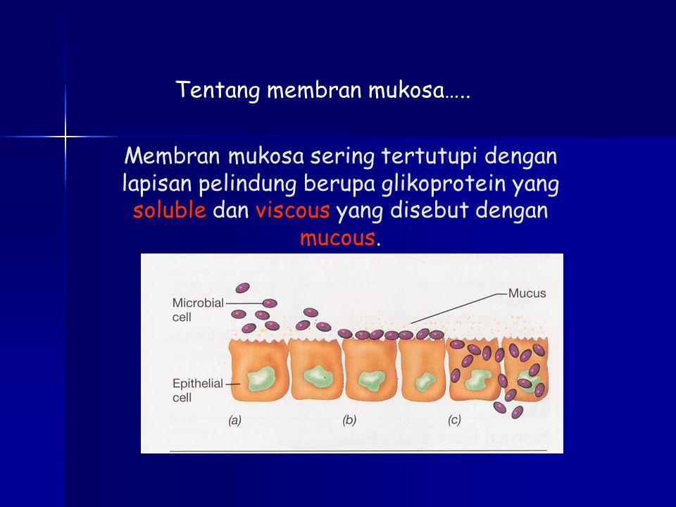 Tentang membran mukosa….. Membran mukosa sering tertutupi dengan lapisan pelindung berupa glikoprotein yang soluble dan viscous yang disebut dengan mu