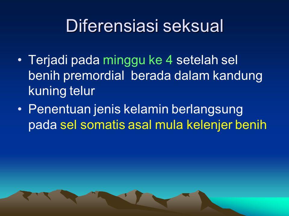 Diferensiasi seksual Terjadi pada minggu ke 4 setelah sel benih premordial berada dalam kandung kuning telur Penentuan jenis kelamin berlangsung pada