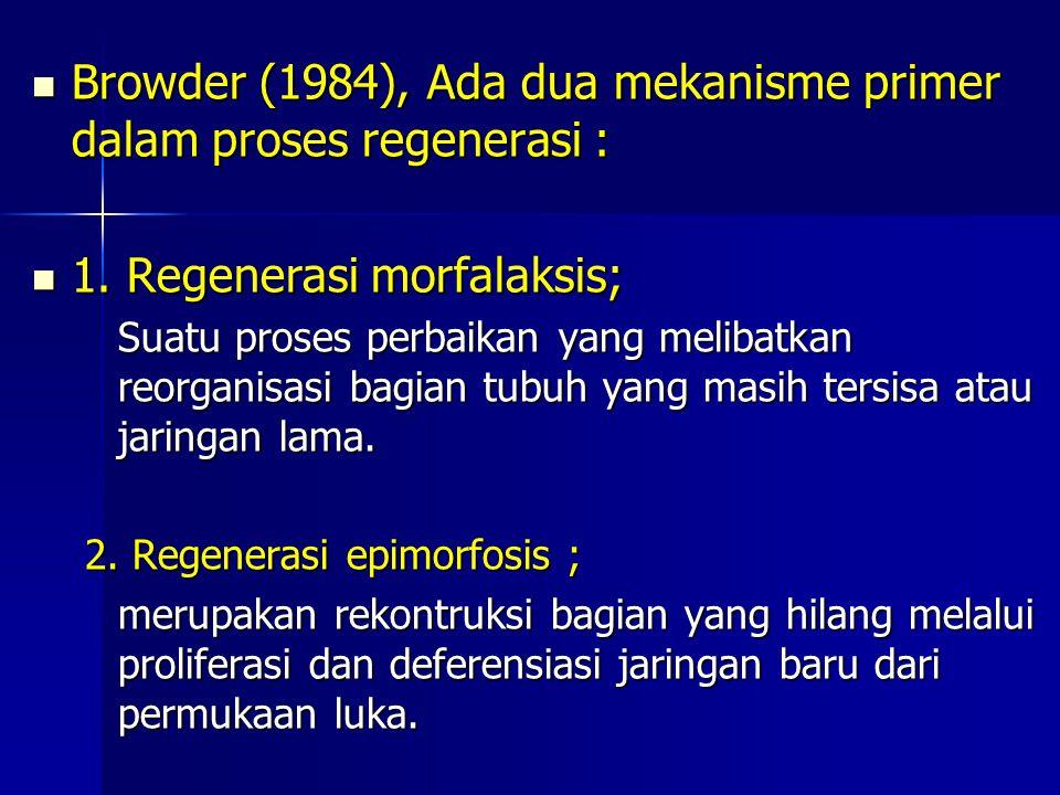 Browder (1984), Ada dua mekanisme primer dalam proses regenerasi : Browder (1984), Ada dua mekanisme primer dalam proses regenerasi : 1. Regenerasi mo