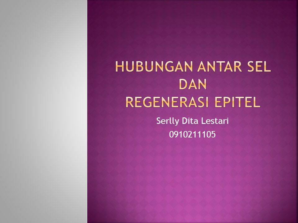 Serlly Dita Lestari 0910211105