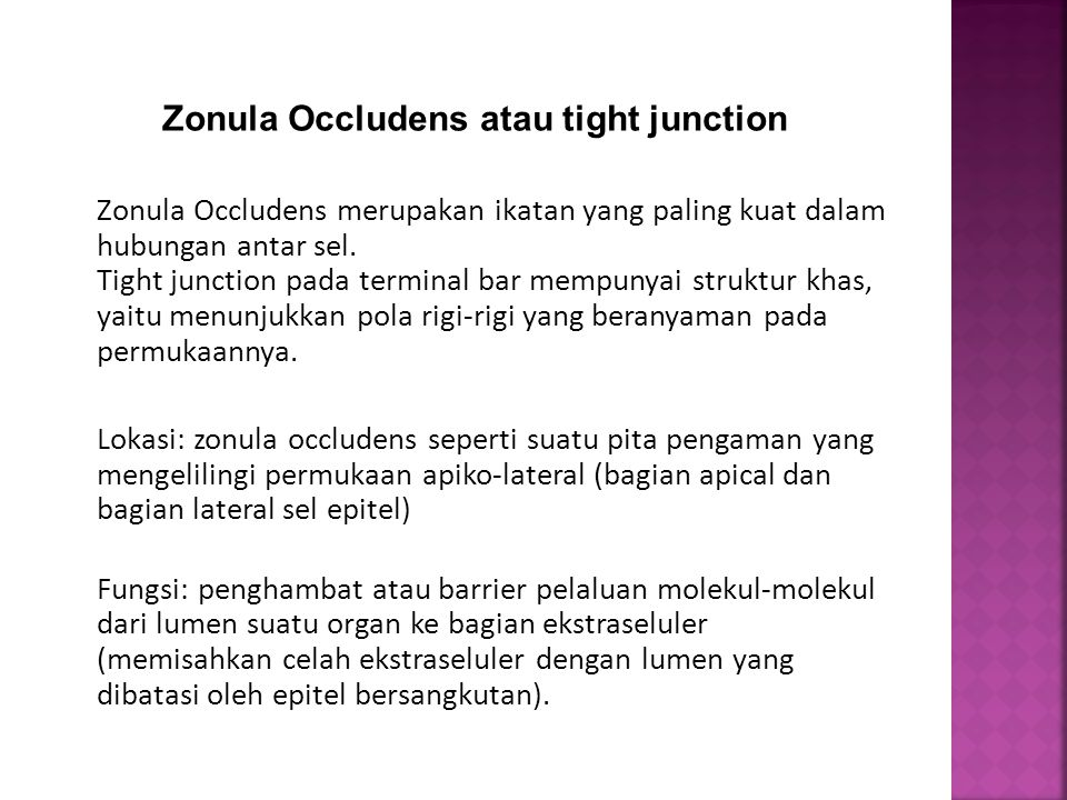 Zonula Occludens merupakan ikatan yang paling kuat dalam hubungan antar sel. Tight junction pada terminal bar mempunyai struktur khas, yaitu menunjukk