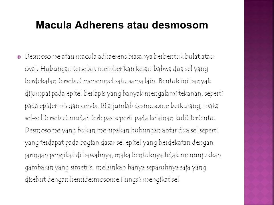  Desmosome atau macula adhaerens biasanya berbentuk bulat atau oval. Hubungan tersebut memberikan kesan bahwa dua sel yang berdekatan tersebut menemp
