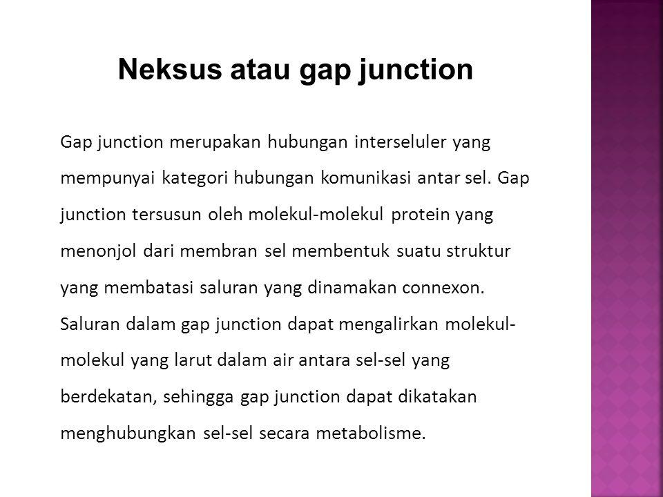 Gap junction merupakan hubungan interseluler yang mempunyai kategori hubungan komunikasi antar sel. Gap junction tersusun oleh molekul-molekul protein
