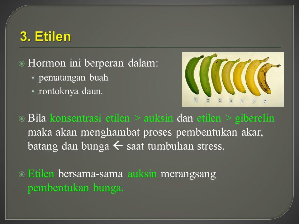  Hormon ini berperan dalam: pematangan buah rontoknya daun.  Bila konsentrasi etilen > auksin dan etilen > giberelin maka akan menghambat proses pem