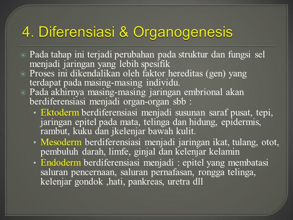  Pada tahap ini terjadi perubahan pada struktur dan fungsi sel menjadi jaringan yang lebih spesifik  Proses ini dikendalikan oleh faktor hereditas (