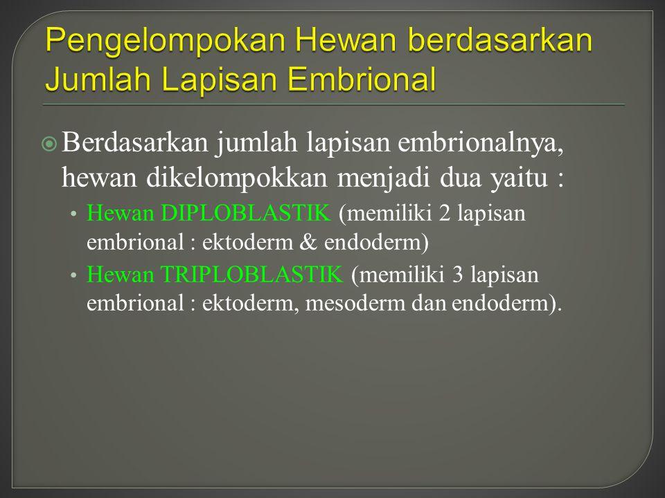  Berdasarkan jumlah lapisan embrionalnya, hewan dikelompokkan menjadi dua yaitu : Hewan DIPLOBLASTIK (memiliki 2 lapisan embrional : ektoderm & endod