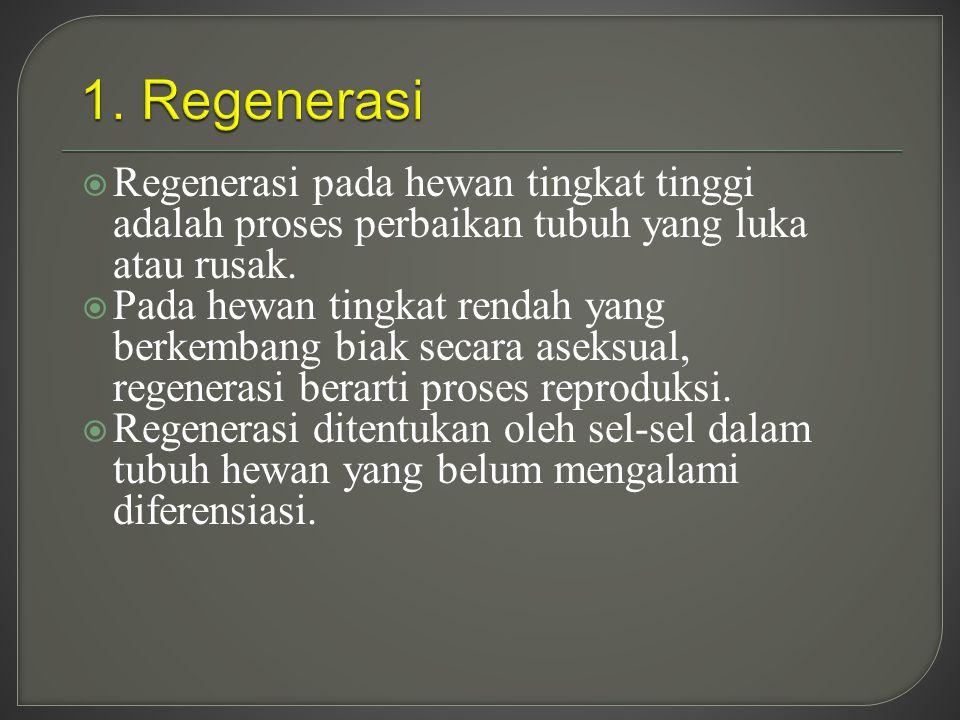  Regenerasi pada hewan tingkat tinggi adalah proses perbaikan tubuh yang luka atau rusak.  Pada hewan tingkat rendah yang berkembang biak secara ase