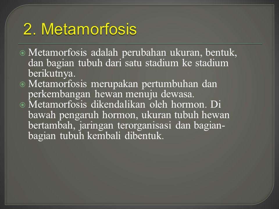  Metamorfosis adalah perubahan ukuran, bentuk, dan bagian tubuh dari satu stadium ke stadium berikutnya.  Metamorfosis merupakan pertumbuhan dan per