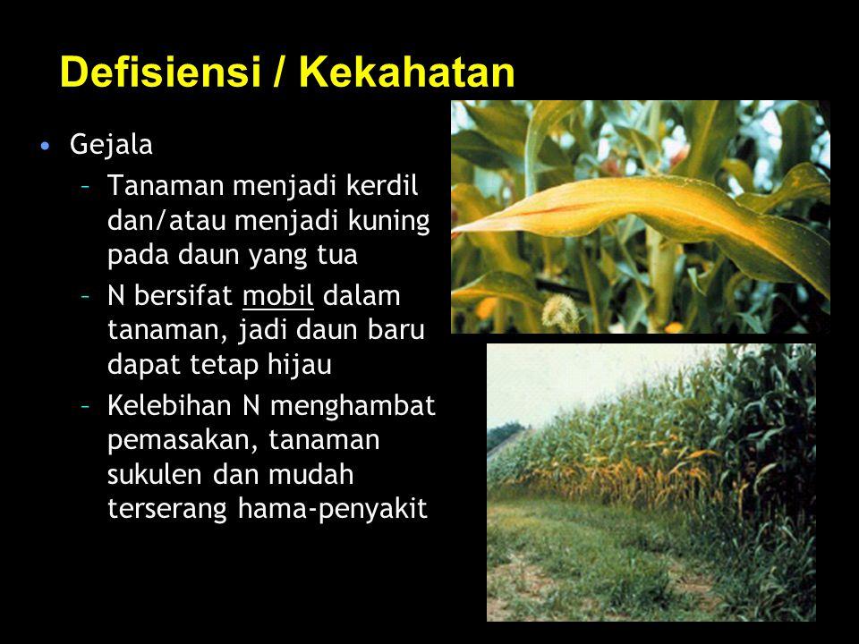 Defisiensi / Kekahatan Gejala –Tanaman menjadi kerdil dan/atau menjadi kuning pada daun yang tua –N bersifat mobil dalam tanaman, jadi daun baru dapat tetap hijau –Kelebihan N menghambat pemasakan, tanaman sukulen dan mudah terserang hama-penyakit