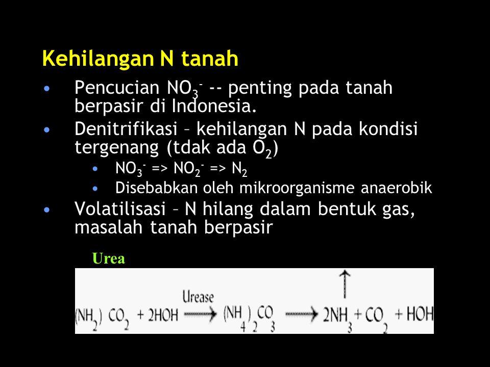 Kehilangan N tanah Pencucian NO 3 - -- penting pada tanah berpasir di Indonesia. Denitrifikasi – kehilangan N pada kondisi tergenang (tdak ada O 2 ) N