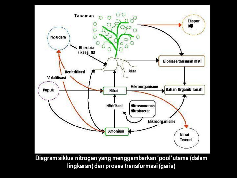 Diagram siklus nitrogen yang menggambarkan 'pool' utama (dalam lingkaran) dan proses transformasi (garis)
