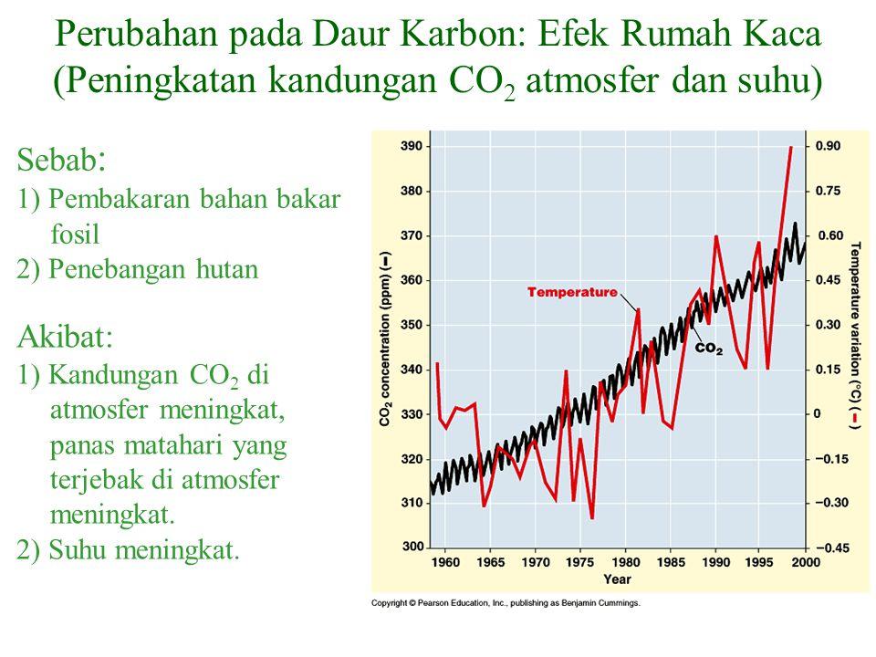 Akibat: 1) Kandungan CO 2 di atmosfer meningkat, panas matahari yang terjebak di atmosfer meningkat. 2) Suhu meningkat. Perubahan pada Daur Karbon: Ef