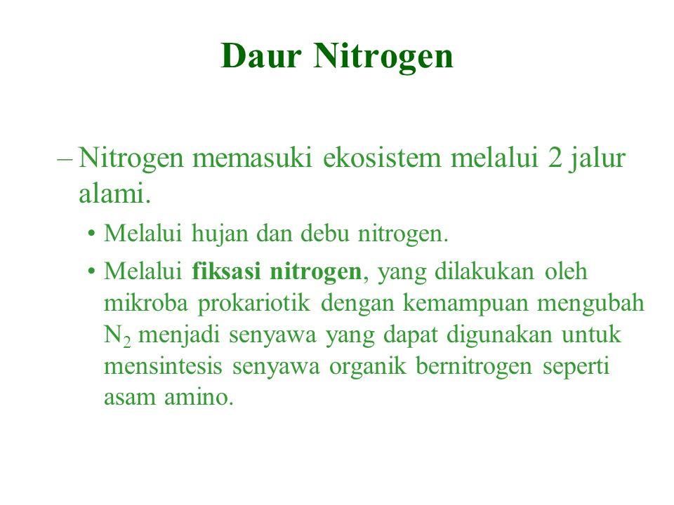 –Nitrogen memasuki ekosistem melalui 2 jalur alami. Melalui hujan dan debu nitrogen. Melalui fiksasi nitrogen, yang dilakukan oleh mikroba prokariotik