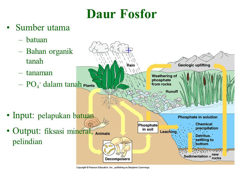 + Sumber utama –batuan –Bahan organik tanah –tanaman –PO 4 - dalam tanah Input: pelapukan batuan Output: fiksasi mineral, pelindian