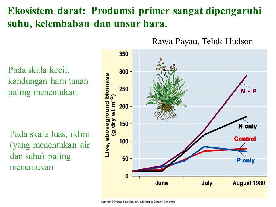 Ekosistem darat: Produmsi primer sangat dipengaruhi suhu, kelembaban dan unsur hara. Pada skala kecil, kandungan hara tanah paling menentukan. Rawa Pa