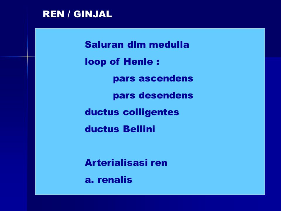 REN / GINJAL Saluran dlm medulla loop of Henle : pars ascendens pars desendens ductus colligentes ductus Bellini Arterialisasi ren a. renalis