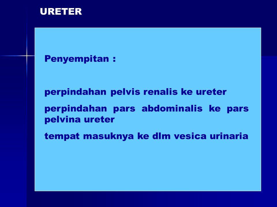 Penyempitan : perpindahan pelvis renalis ke ureter perpindahan pars abdominalis ke pars pelvina ureter tempat masuknya ke dlm vesica urinaria URETER