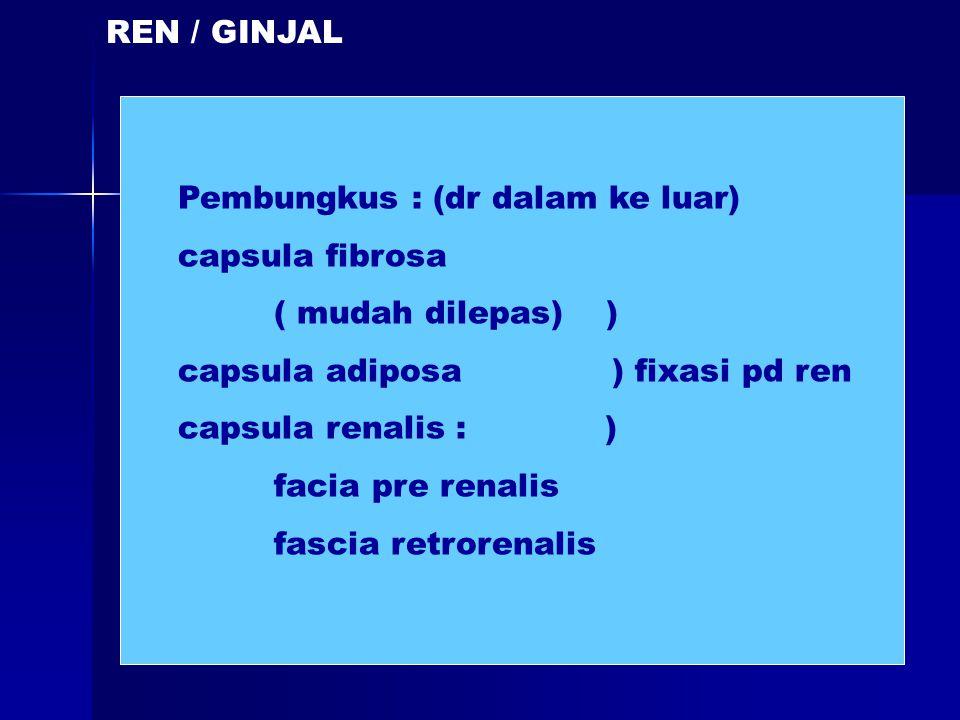 REN / GINJAL Pembungkus : (dr dalam ke luar) capsula fibrosa ( mudah dilepas) ) capsula adiposa ) fixasi pd ren capsula renalis : ) facia pre renalis