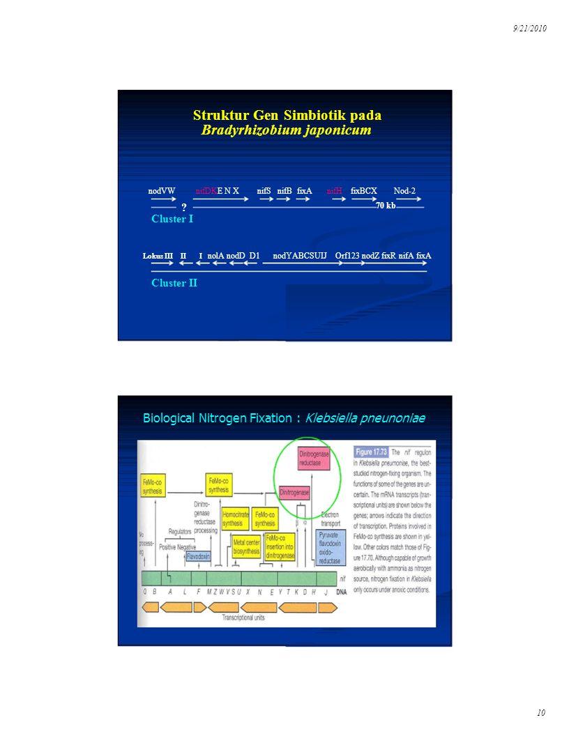 9/21/2010 Struktur Gen Simbiotik pada Bradyrhizobium japonicum nodVWnifDKE N XnifS nifB fixAnifH fixBCXNod-2 nodYABCSUIJ Orf123 nodZ fixR nifA fixA 70