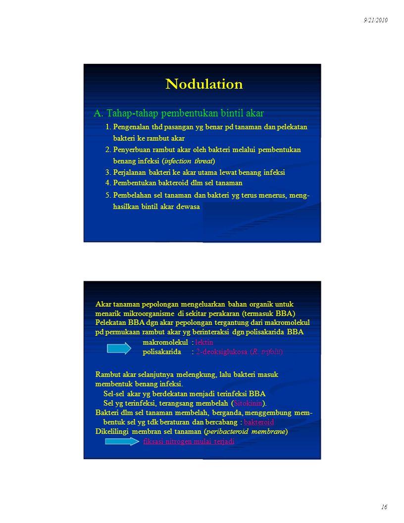 9/21/2010 16 Nodulation A. Tahap-tahap pembentukan bintil akar 1. Pengenalan thd pasangan yg benar pd tanaman dan pelekatan bakteri ke rambut akar 2.