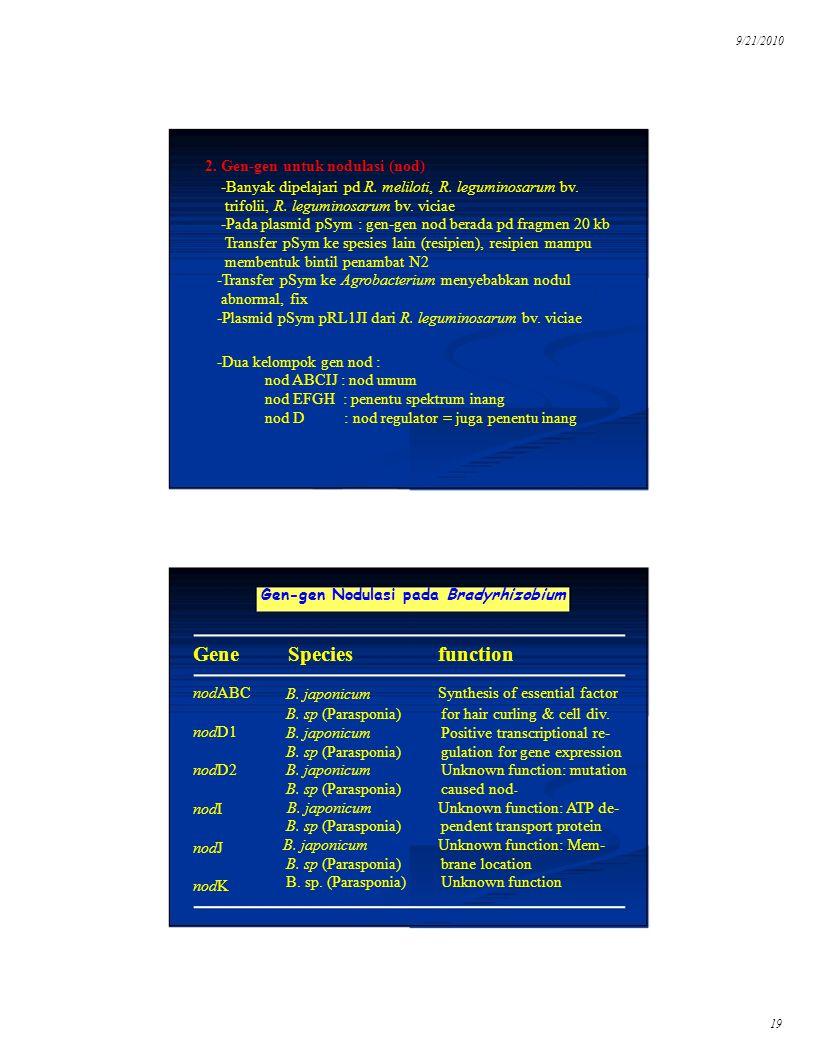 19 9/21/2010 2. Gen-gen untuk nodulasi (nod) -Banyak dipelajari pd R. meliloti, R. leguminosarum bv. trifolii, R. leguminosarum bv. viciae -Pada plasm