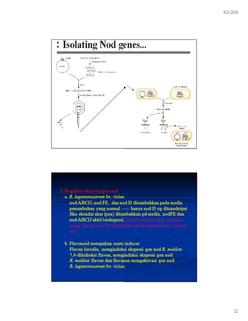 9/21/2010 22 3. Regulasi ekspresi gen nod a. R. leguminosarum bv. viciae nod ABCIJ, nod FE, dan nod D ditumbuhkan pada media penumbuhan yang normal --