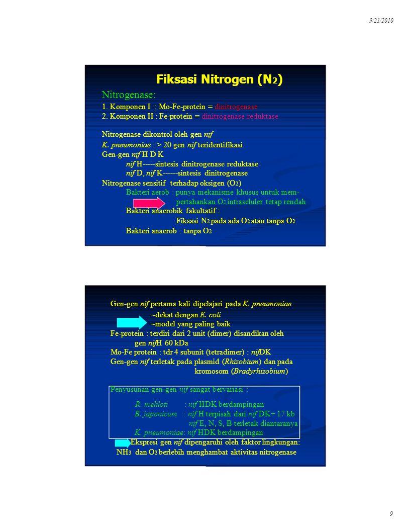 9/21/2010 Fiksasi Nitrogen (N 2 ) Nitrogenase: 1. Komponen I : Mo-Fe-protein = dinitrogenase 2. Komponen II : Fe-protein = dinitrogenase reduktase Nit