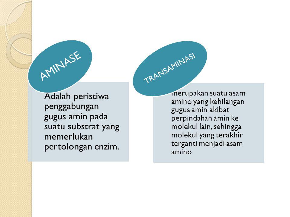 Adalah peristiwa penggabungan gugus amin pada suatu substrat yang memerlukan pertolongan enzim. AMINASE merupakan suatu asam amino yang kehilangan gug