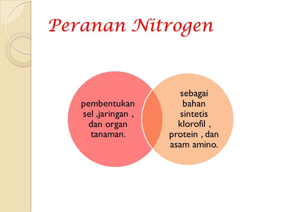 Peranan Nitrogen pembentukan sel,jaringan, dan organ tanaman. sebagai bahan sintetis klorofil, protein, dan asam amino.