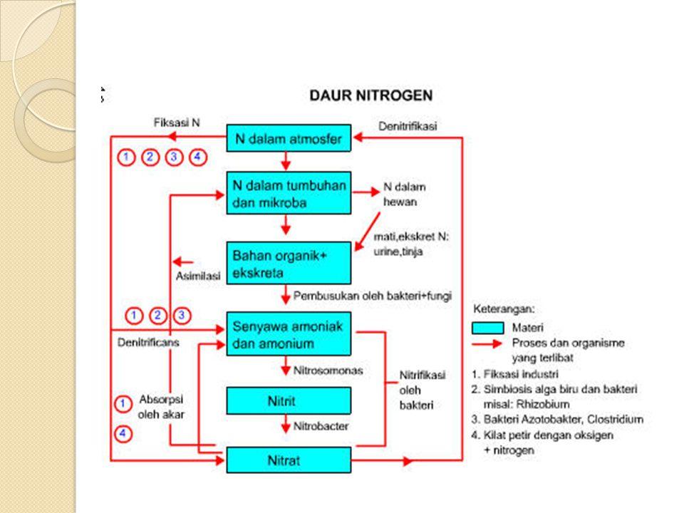 2.Metabolisme Nitrogen 1.