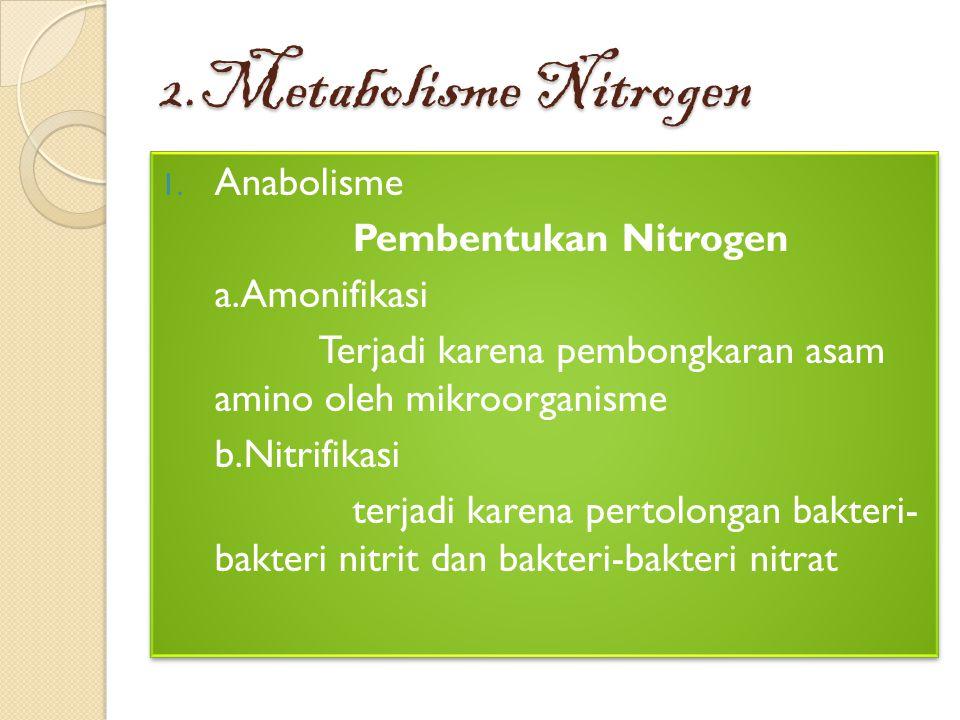 2.Metabolisme Nitrogen 1. Anabolisme Pembentukan Nitrogen a.Amonifikasi Terjadi karena pembongkaran asam amino oleh mikroorganisme b.Nitrifikasi terja