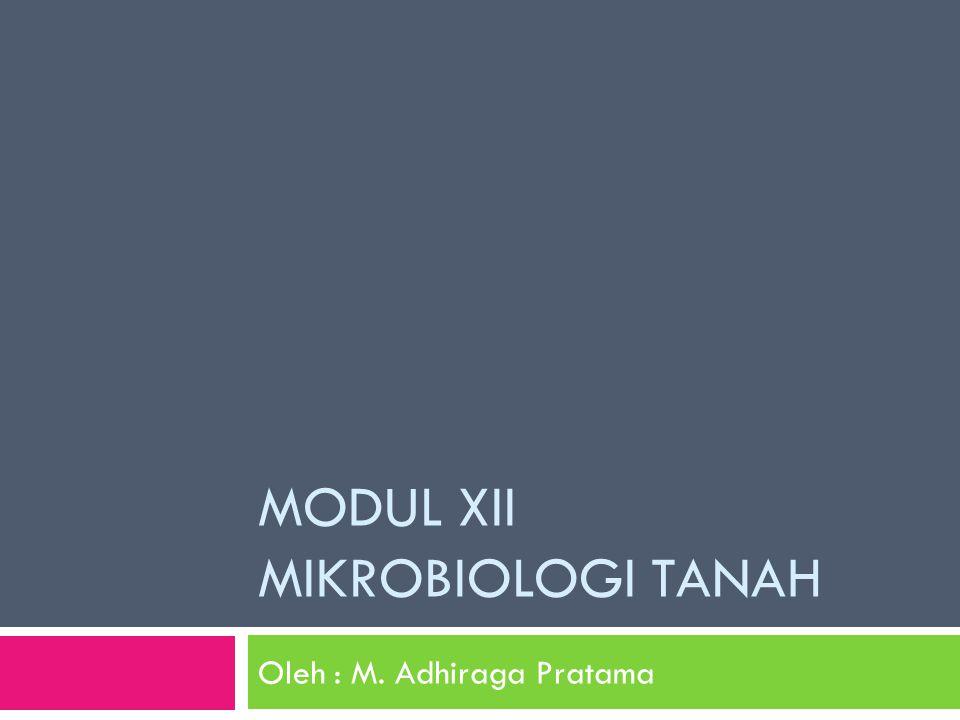 MODUL XII MIKROBIOLOGI TANAH Oleh : M. Adhiraga Pratama