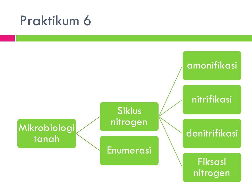 Praktikum 6 Mikrobiologi tanah Siklus nitrogen amonifikasinitrifikasidenitrifikasi Fiksasi nitrogen Enumerasi