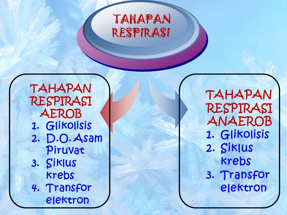 TAHAPAN RESPIRASI TAHAPAN RESPIRASI ANAEROB 1.Glikolisis 2.Siklus krebs 3.Transfor elektron. TAHAPAN RESPIRASI AEROB 1.Glikolisis 2.D.O. Asam Piruvat