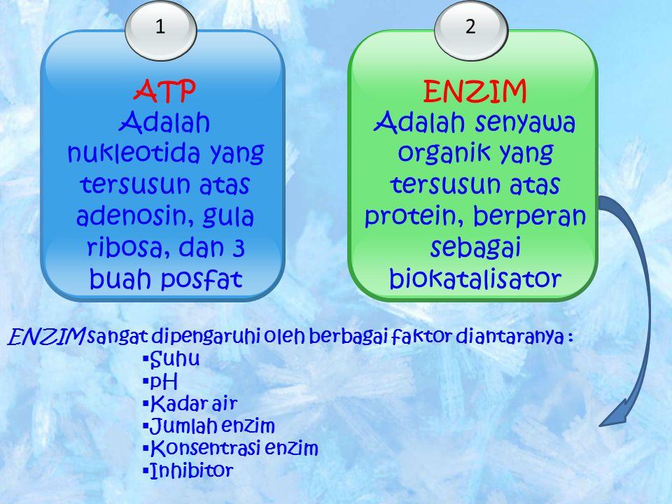 1 Adalah nukleotida yang tersusun atas adenosin, gula ribosa, dan 3 buah posfat 2 ENZIM Adalah senyawa organik yang tersusun atas protein, berperan se
