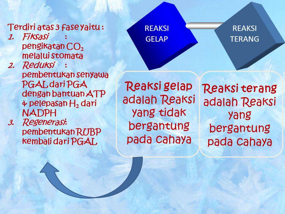 PERBEDAAN REAKSI GELAP & REAKSI TERANG NoPEMBEDAREAKSI TERANGREAKSI GELAP 1Tempat terjadinya GranaStroma 2Penggunaan cahaya Membutuhkan cahaya Tidak butuh cahaya 3Bahan yang diperlukan Klorofil, cahaya, air ATP, CO 2,NADPH 2 4ProdukCO 2 & NADPH 2 Amilum