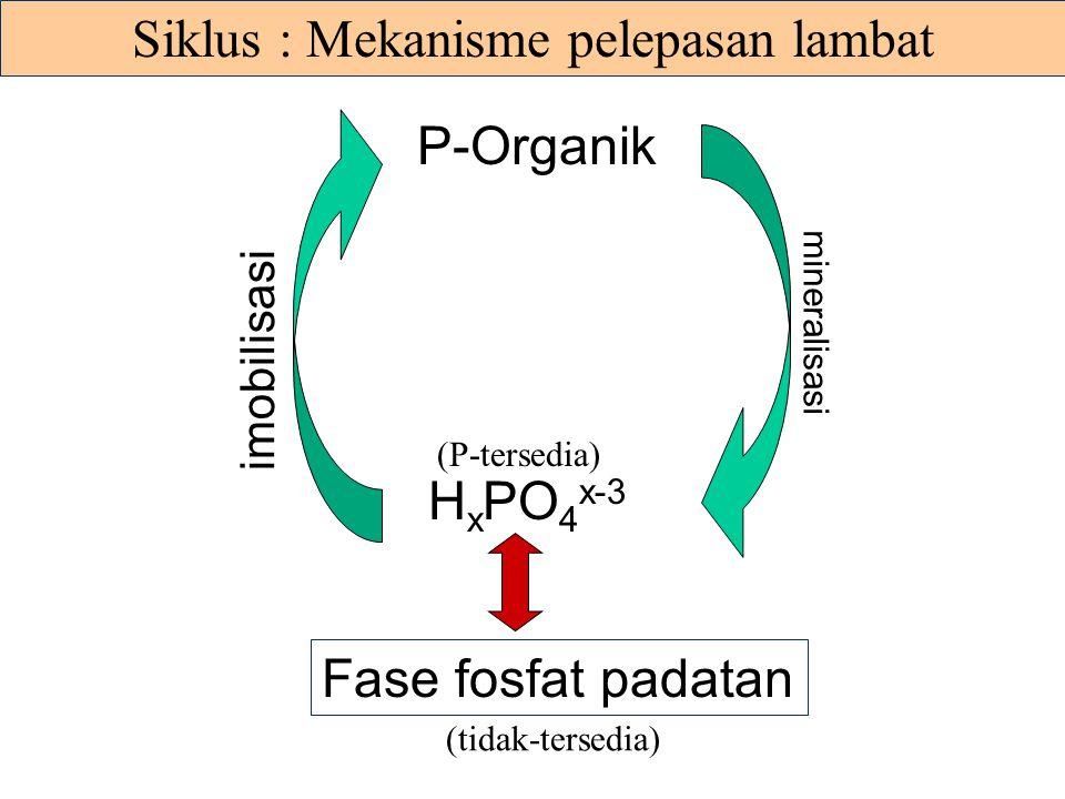 P-Organik dalam tanah * Sekitar 20 - 80 % dari P-total dalam tanah berupa P-organik * Kebanyakan berupa fosfat-inositol, C 6 H 6 (OH) 6 - sekitar 10 -
