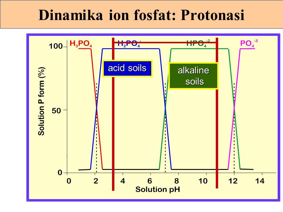 Reaksi fosfat pada tanah alkalis pH tinggi P berubah menjadi bentuk sukar larut senyawa-senyawa Ca dan Mg Ca(H 2 PO 4 ) 2 + CaCO 3 + H 2 O  2 CaHPO 4