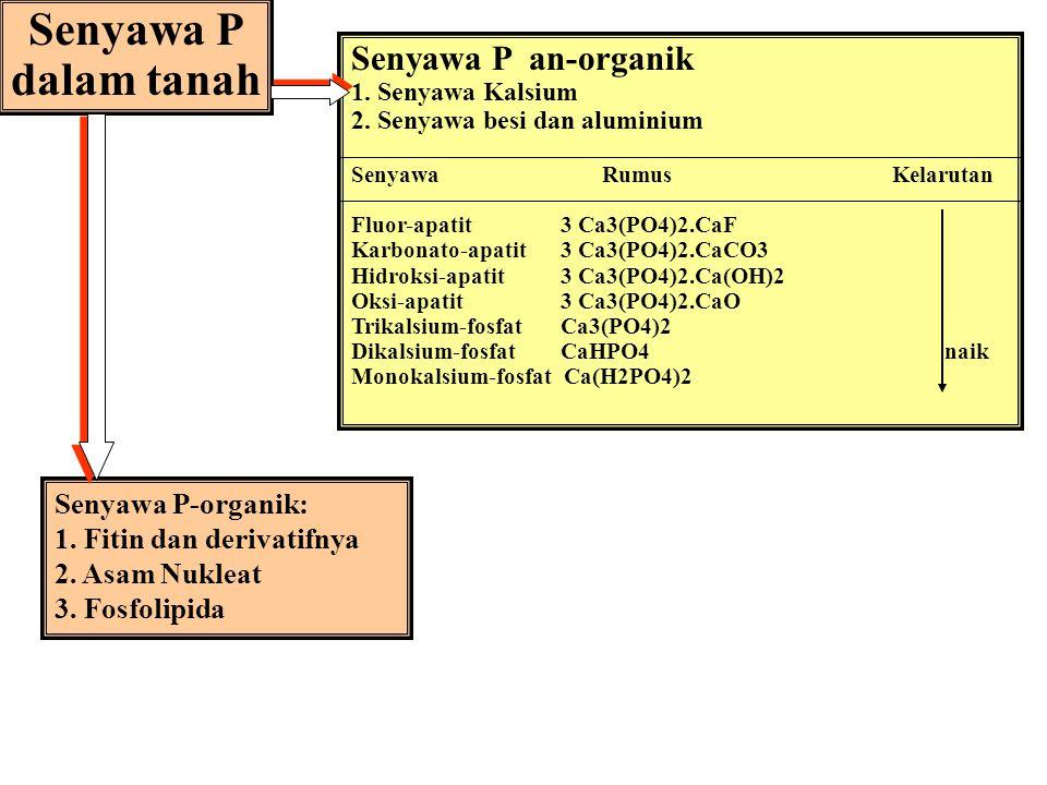 HUBUNGAN P-TANAH DAN TANAMAN * Proses-proses Energi dan reproduksi * Pertumbuhan dan perkembangan a Pertumbuhan akar A Kemasakan (pembentukan buah, bi