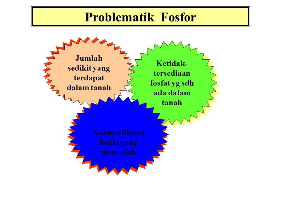MK. Dasar Ilmu Tanah bahan kajian: FOSFAT DALAM TANAH diabstraksikan Oleh soemarno.jursntnhfpub. Okt 2012
