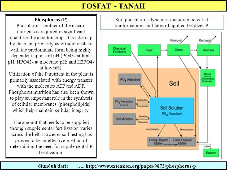 Faktor Retensi P dalam tanah pH TANAH Kisaran pH tanah yg optimum bagi ketersediaan p-tanah adalah 5.5 - 7.0 Pd tanah dg pH rendah, retensi terjadi karena adanya reaksi fosfat dengan Fe, Al dan oksida hidratnya.