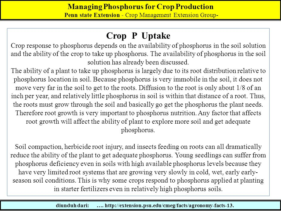 Managing Phosphorus for Crop Production Penn state Extension - Crop Management Extension Group- diunduh dari: …. http://extension.psu.edu/cmeg/facts/a