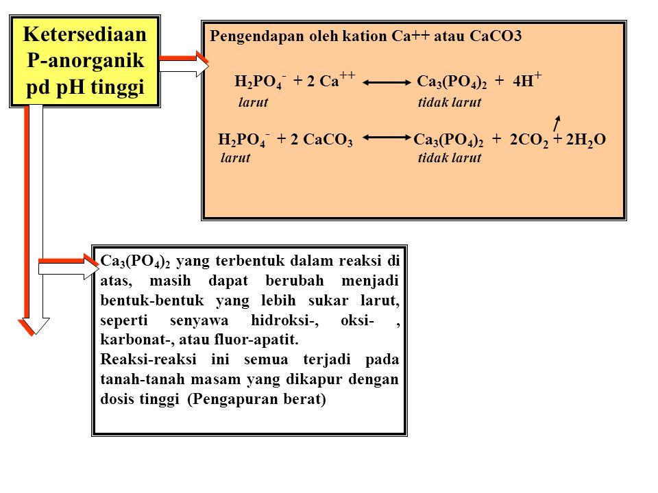 Ketersediaan P-anorganik tanah masam Pengendapan oleh kation Fe, Al, Mn Al 3+ + H 2 PO 4 - + H 2 O 2H + + Al(OH) 2 H 2 PO 4 larut tdk larut Dlm tanah