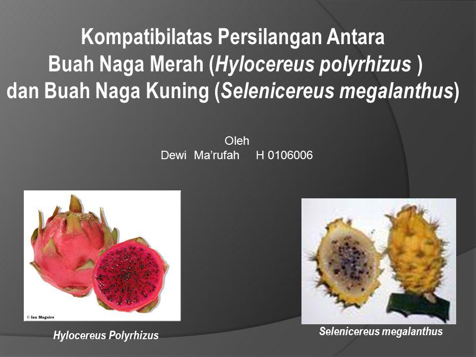 Kompatibilatas Persilangan Antara Buah Naga Merah ( Hylocereus polyrhizus ) dan Buah Naga Kuning ( Selenicereus megalanthus ) Oleh Dewi Ma'rufah H 010