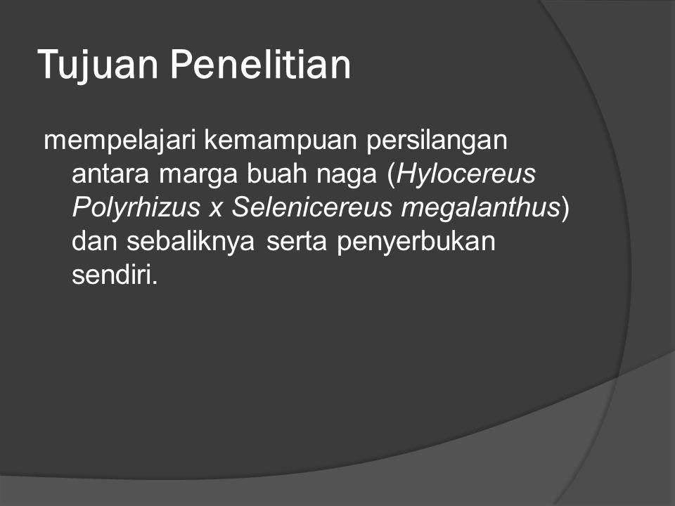 Tujuan Penelitian mempelajari kemampuan persilangan antara marga buah naga (Hylocereus Polyrhizus x Selenicereus megalanthus) dan sebaliknya serta pen