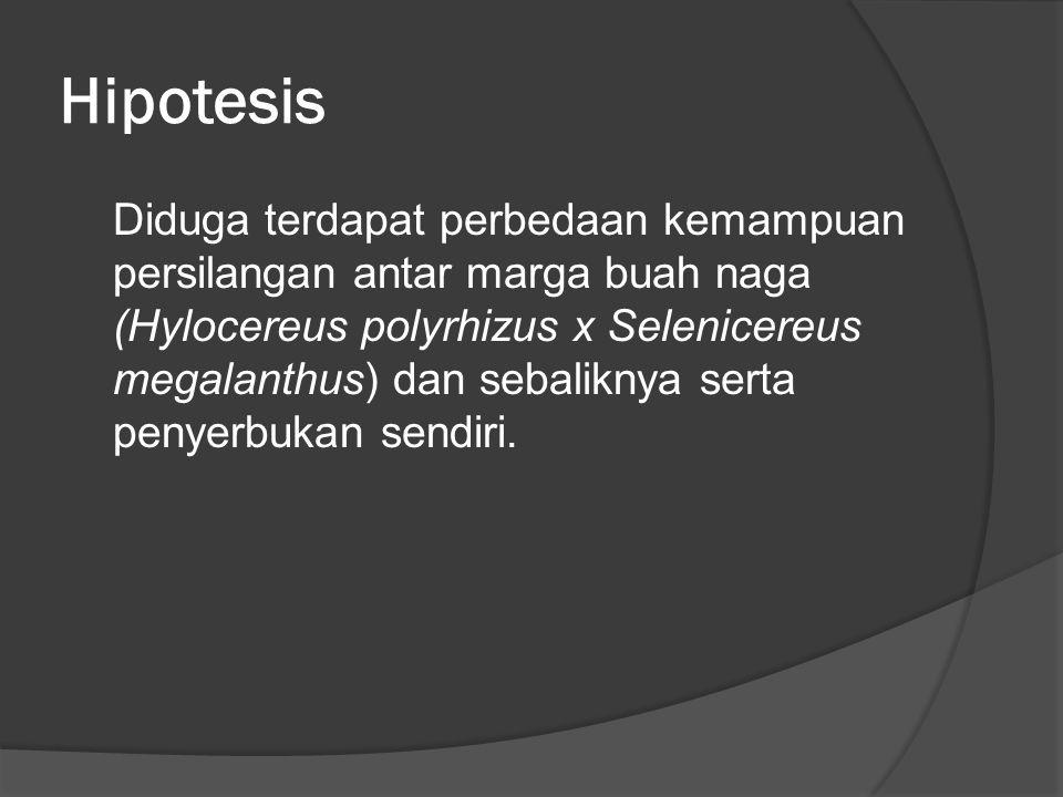 Hipotesis Diduga terdapat perbedaan kemampuan persilangan antar marga buah naga (Hylocereus polyrhizus x Selenicereus megalanthus) dan sebaliknya sert