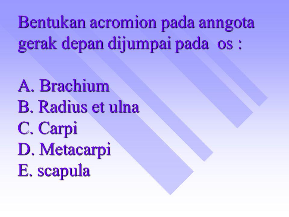 Bentukan acromion pada anngota gerak depan dijumpai pada os : A. Brachium B. Radius et ulna C. Carpi D. Metacarpi E. scapula