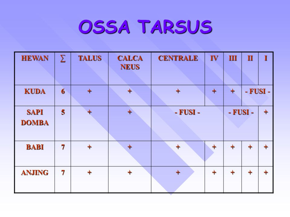 OSSA TARSUS HEWAN∑TALUS CALCA NEUS CENTRALEIVIIIIII KUDA6+++++ - FUSI - SAPIDOMBA5++ + BABI7+++++++ ANJING7+++++++