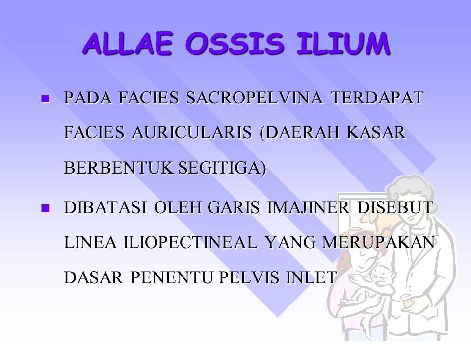 ALLAE OSSIS ILIUM PADA FACIES SACROPELVINA TERDAPAT FACIES AURICULARIS (DAERAH KASAR BERBENTUK SEGITIGA) DIBATASI OLEH GARIS IMAJINER DISEBUT LINEA IL